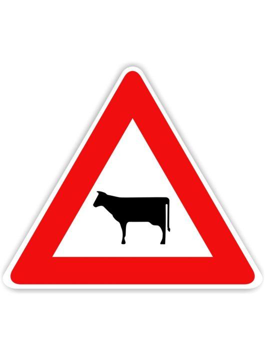Szarvasmarha veszély közlekedési tábla