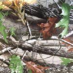 Eco matricabomba